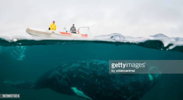 Split image of a boat and a southern right whale on a cloudy day, Nuevo Gulf, Valdes Peninsula.