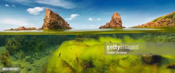 Split Level Green Algae And Rocks