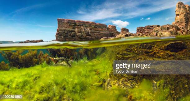 Split Level Green Algae With Snake And Rocks