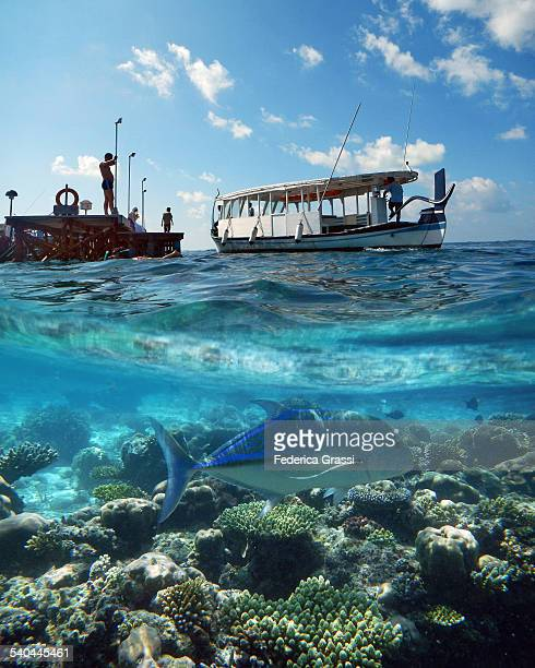 split level photo of coral reef and dhony - deep sea fishing stock photos and pictures
