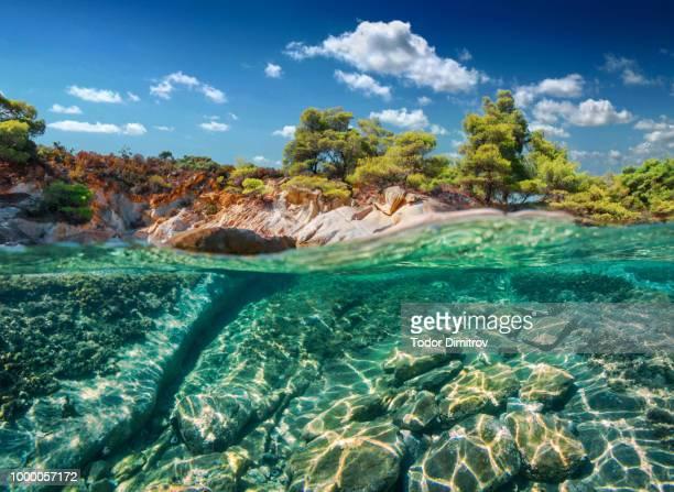 Split Level Reef And Trees