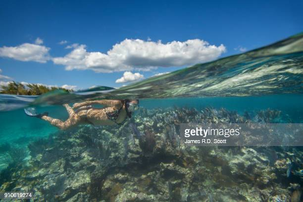 split level shot of female snorkeler in riviera maya - mayan riviera stock photos and pictures