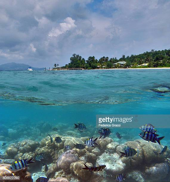 Split Level View of Tropical Coral Reef Lagoon, Seychelles