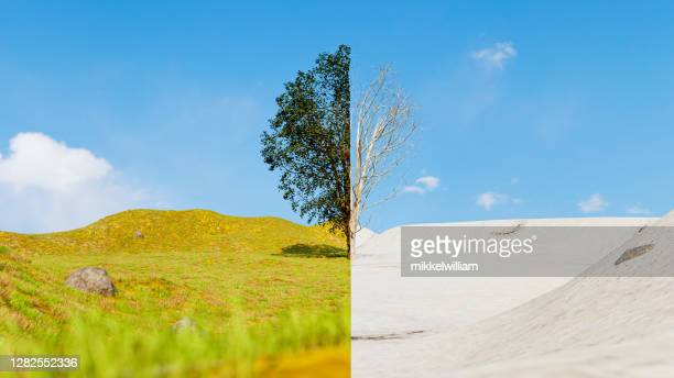 split screen of a tree in summer and winter showing the season change - time stock pictures, royalty-free photos & images