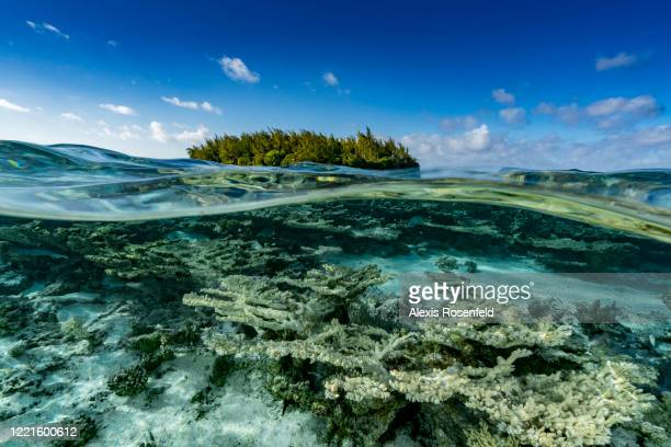 """Split shot of a tropical island called """"motu"""" and underwater view of the coral reef on February 14 Gambier Islands, French Polynesia, South Pacific...."""