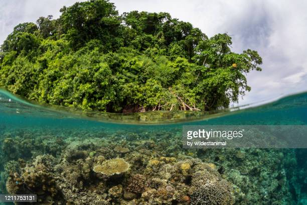 split shot of coral reef and mangrove forest, kimbe bay, papua new guinea. - reef stock pictures, royalty-free photos & images