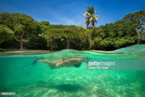 split shot of female snorkeler at pigeon island - st. lucia stock pictures, royalty-free photos & images