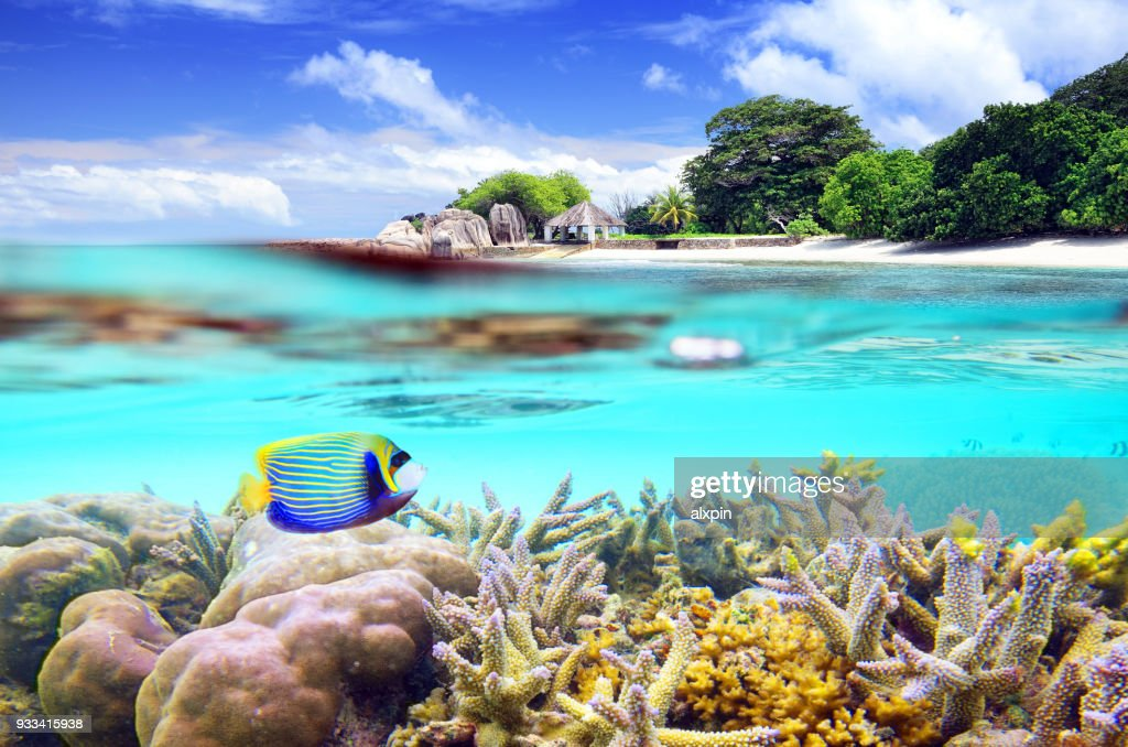 Split shot of tropical paradise : Stock Photo