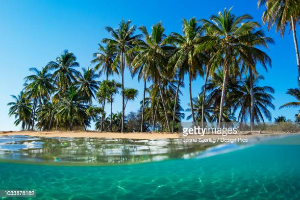 split view with beach and palm trees - lanai stock photos and pictures