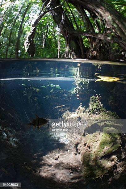 Splitimage of Mangrove Jellyfish Lake Micronesia Palau