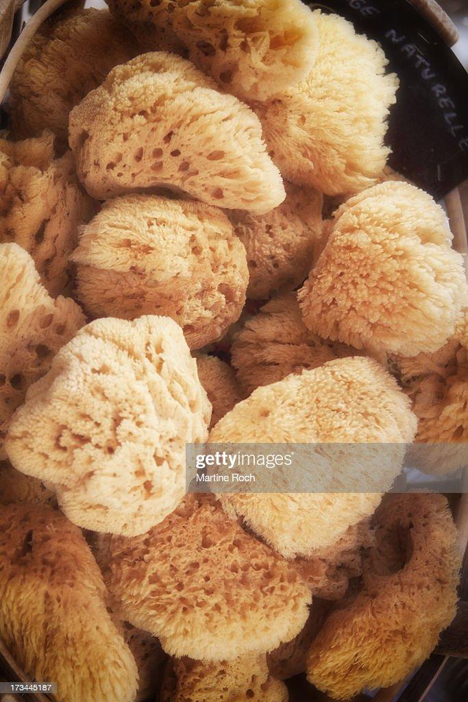 Sponges : Stock Photo