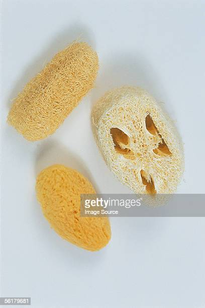 sponges - loofah stock photos and pictures