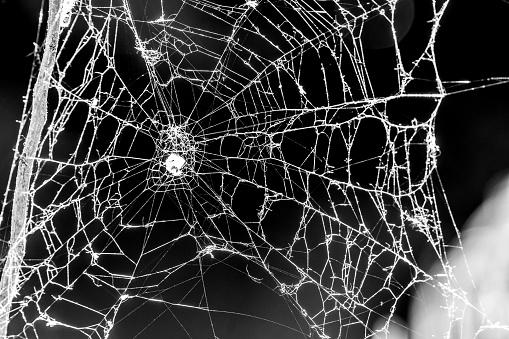 Spooky Cobweb - gettyimageskorea