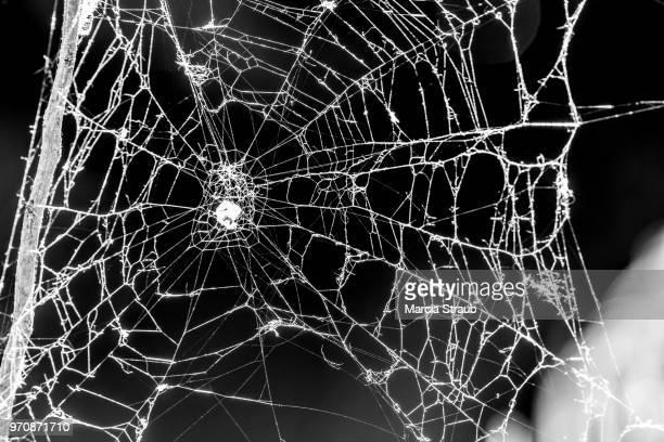 Spooky Cobweb