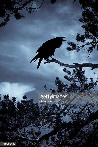 spooky croaky raven - ravens stock photos and pictures