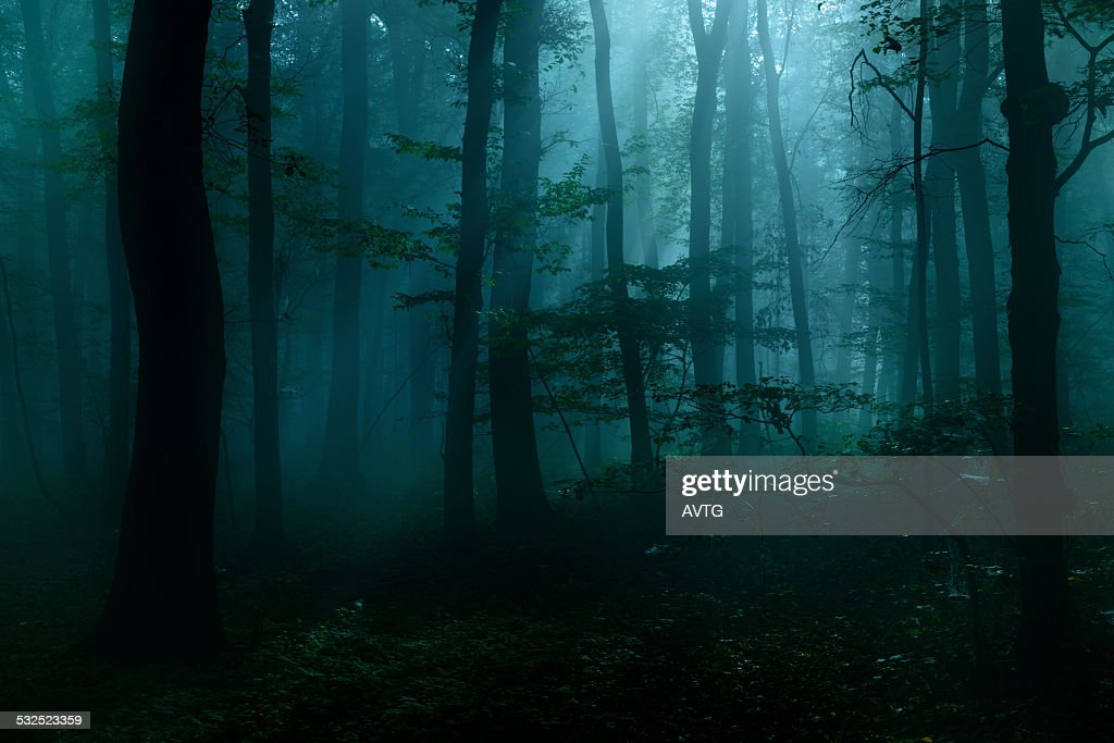 Spooky Dark Forest at Night in Moonlight : Stock Photo