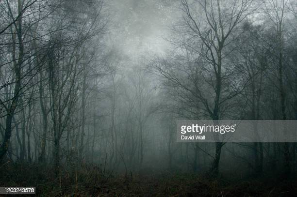 a spooky dark forest on a foggy day. with a digital paint effect. with a grunge, blue, textured edit. - forest stock pictures, royalty-free photos & images