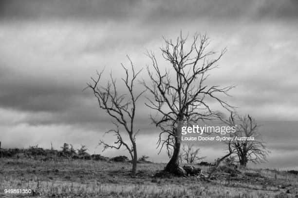 Spooky dying trees on the countryside