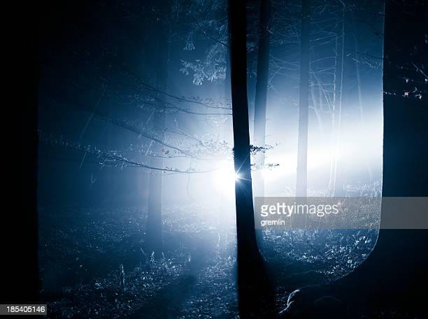 Spooky foggy forest backlit image