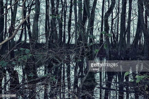 Spooky forest in the winter.