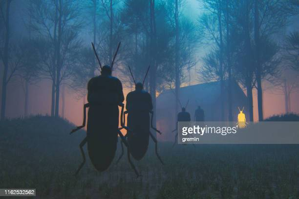 spooky insect priest in the forest at night - cerimónia imagens e fotografias de stock