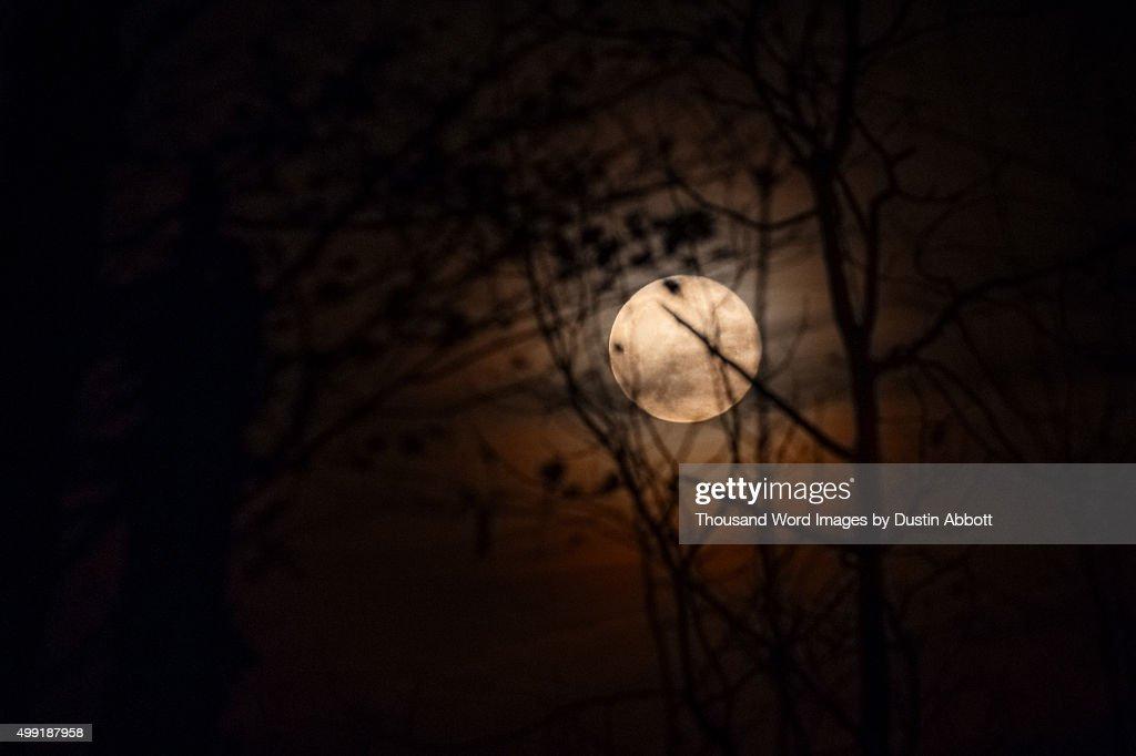 Spooky Moon : Stock Photo