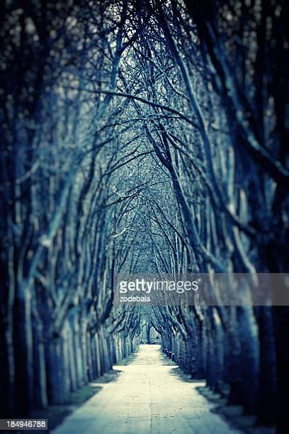 スプーキー Road で冬の裸の木