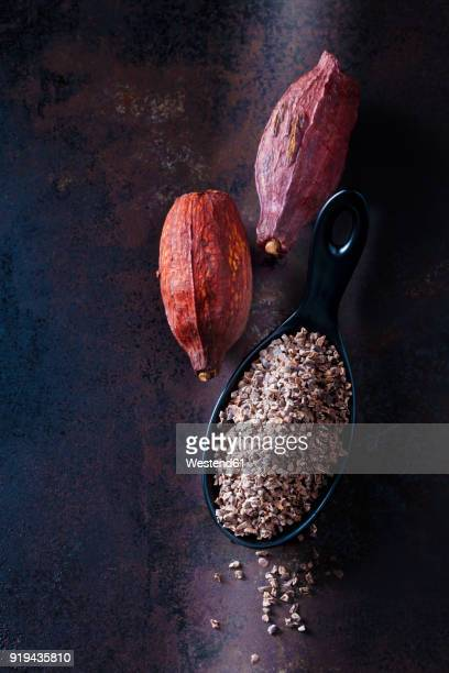 Spoon of crushed raw cacao nibs and cacao pods on rusty metal