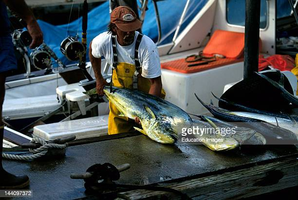 Sport Fishing Boat Hand Unloading Mahi Mahi