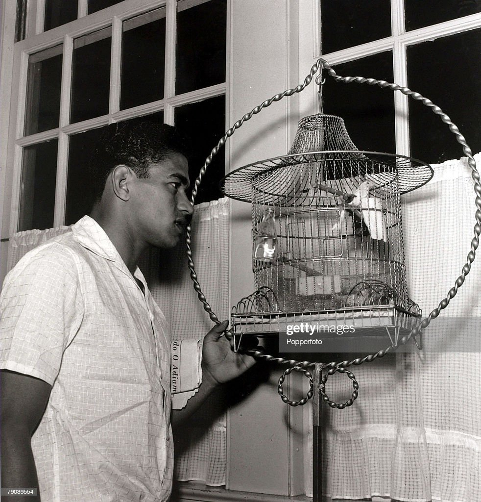 Sport. Football. July 1962. Brazil star Garrincha interested in a small caged bird. He played 60 times for Brazil and with he and Pele in the team the national side never lost, his first international defeat occurred in his last game for Brazil in the 196 : News Photo