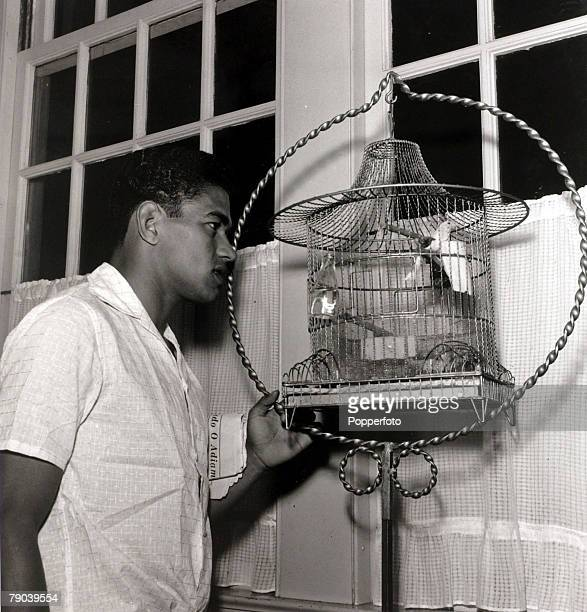 Sport Football July 1962 Brazil star Garrincha interested in a small caged bird He played 60 times for Brazil and with he and Pele in the team the...