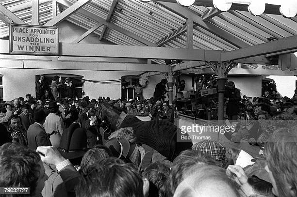 Sport Horse Racing The Grand National Aintree Liverpool England 2nd April 1977 The successful horse Red Rum is led into the winners enclosure