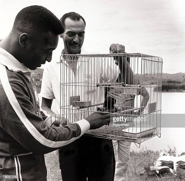Sport/Football Brazil at Lambari circa 1966 Brazil star Pele is pictured with a caged bird named after him at the Brazil training camp where they are...