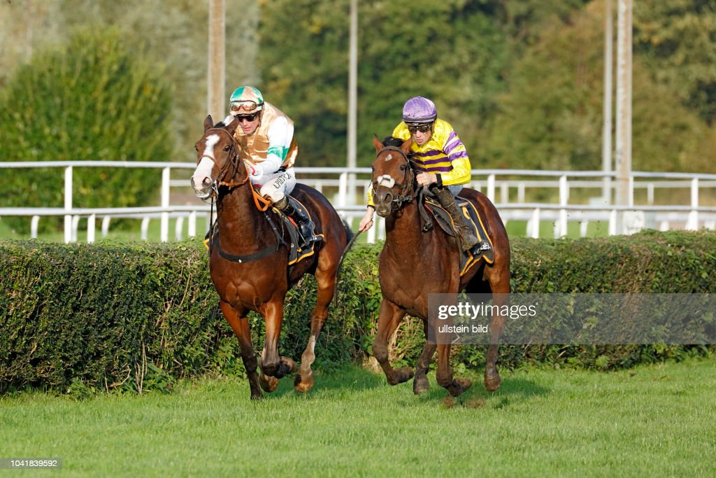 Sports Equestrian Sport Horserace Horse Racing Racecourse Dortmund Race Day