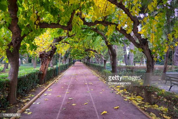 sports track in a public park in autumn,izmir. - emreturanphoto stock pictures, royalty-free photos & images