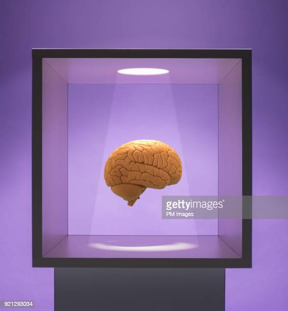 Spot lit Human brain in box