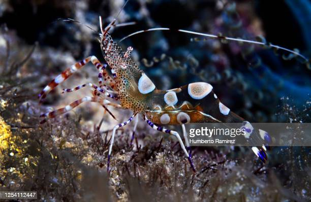 471 Popcorn Shrimp Photos And Premium High Res Pictures Getty Images