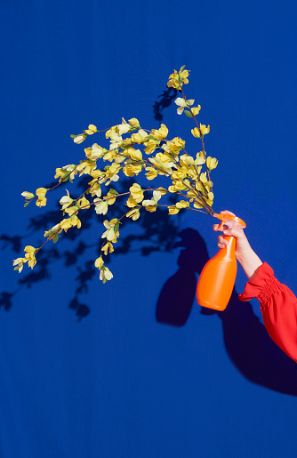 spray bottle with flowers coming out - gettyimageskorea