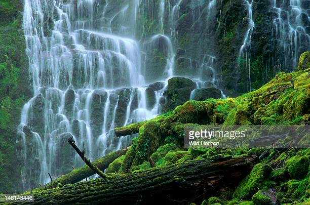 Spray from Oregon's most photographed waterfall, Proxy Falls, beautifies nearby logs and rocks with lush growths of moss, Three Sisters Wilderness,...