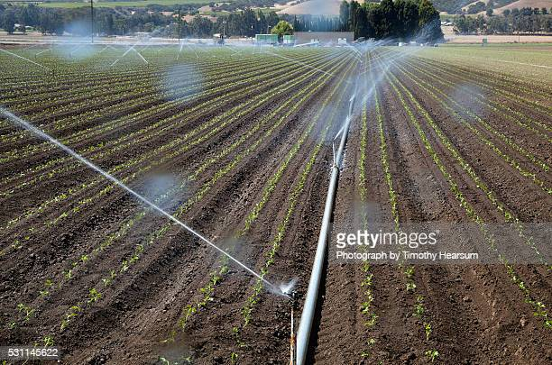 spray irrigation system waters multiple rows of young lettuce plants - timothy hearsum stock pictures, royalty-free photos & images