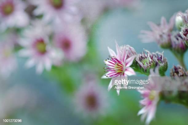 Spray of Tiny Flowers