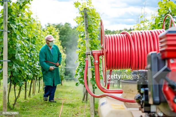 Spraying grapes