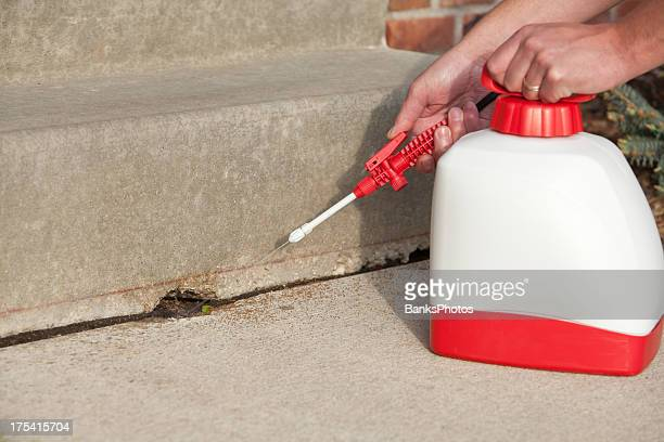 Spraying Insecticide on Crack in House Steps
