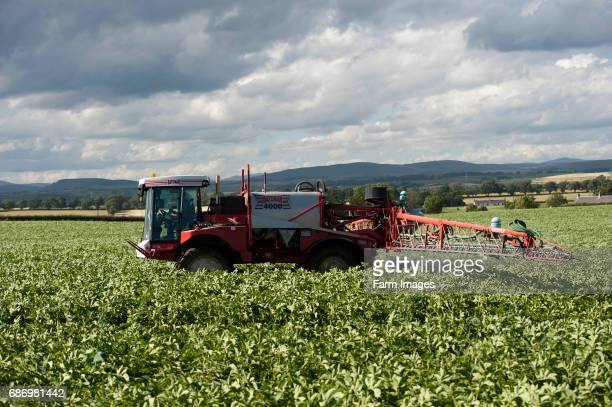 Spraying potoato crop with self propelled sprayer Scotland
