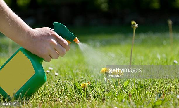 spraying the dandelions - weed stock photos and pictures