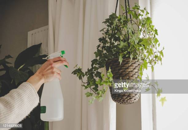 spraying water on the plant - hanging basket stock pictures, royalty-free photos & images