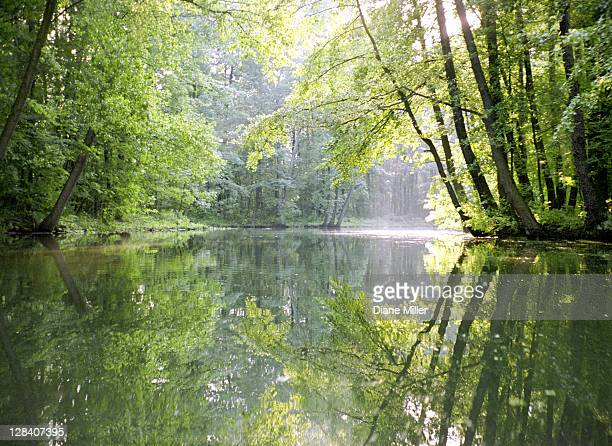spreewald canal reflection, an area of old canals in woods.