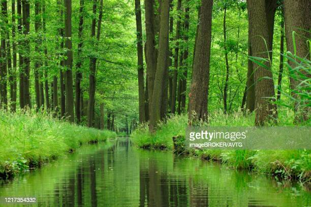 spreewald, dense forest reflected in the water of a river, brandenburg, germany - spreewald stock pictures, royalty-free photos & images