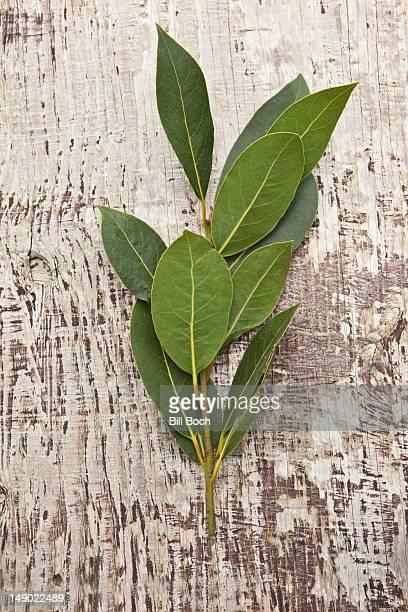 A sprig of fresh bay leaves