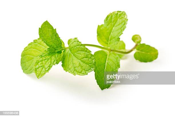 Sprig of fresh mint against white background